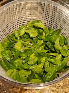 Fresh-picked basil leaves in the salad spinner